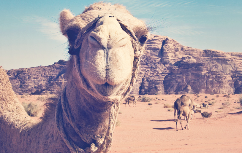 Is Your Camel Tied Up?
